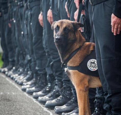 diesel dog 2 french raid