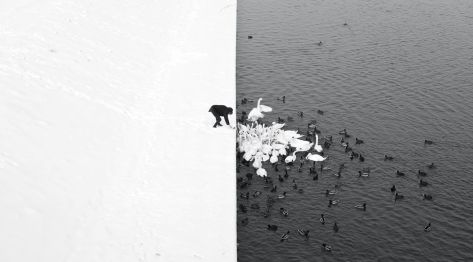 A MAN FEEDING SWANS IN THE SNOW,Marcin Ryczek (PL) , Poland (Krakow)