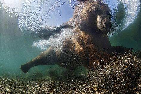 Mike Korostelev (RU), Kuril Lake (Kamchatka, Russia)