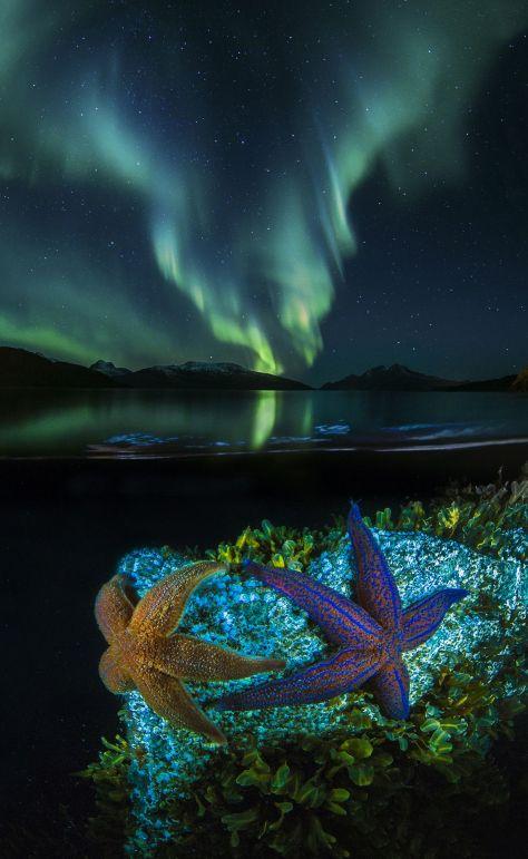 Audun Rikardsen (NO) romsø, Norway: Stars from Two Worlds