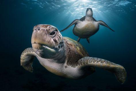 turtles-in-the-sun-rays-greh-lecoeur-tenerife